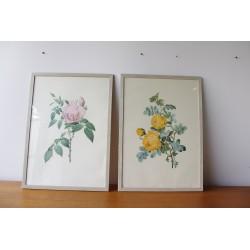 Para ilustracji botanicznych, aut. P. J. Redouté, lata 70. obrazy